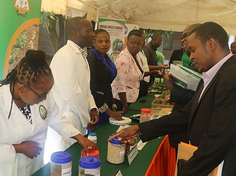 Essay Writing Competition Launched as Part of Activities to Mark the International Year of Plant Health